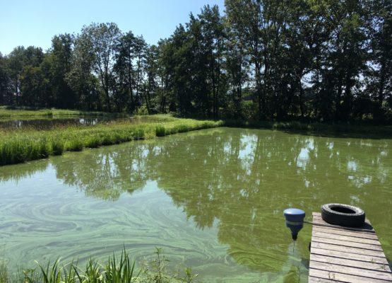 Wiederverleihung der Teichanlagen Krenn